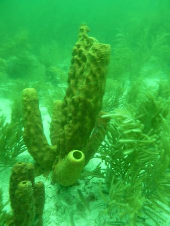 Diving June 26, 2010