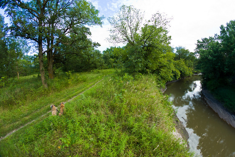 Dogs on trail next to the river