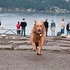 Photo of Lulu from the dog park at Magnusson Park in Seattle