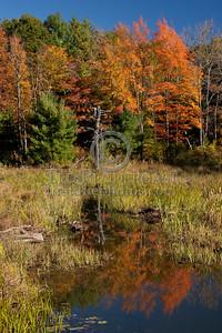 Trees And Pond on Stony Brook Rd - Great Barrington MA