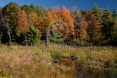 Trees And Pond on Stony Brook Rd - Great Barrington MA