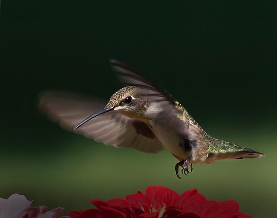 November Competition 3 - 1st Place - Class A - Open Category - Title: Super Swoop - Bob Thompson