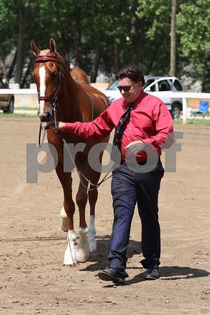Ivanhoe Horse Show 2010- Western & Halter Classes
