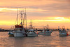 The rush to Steveston Harbour as the sockeye salmon fishery closes for the day. <br /> Richmond, British Columbia, Canada
