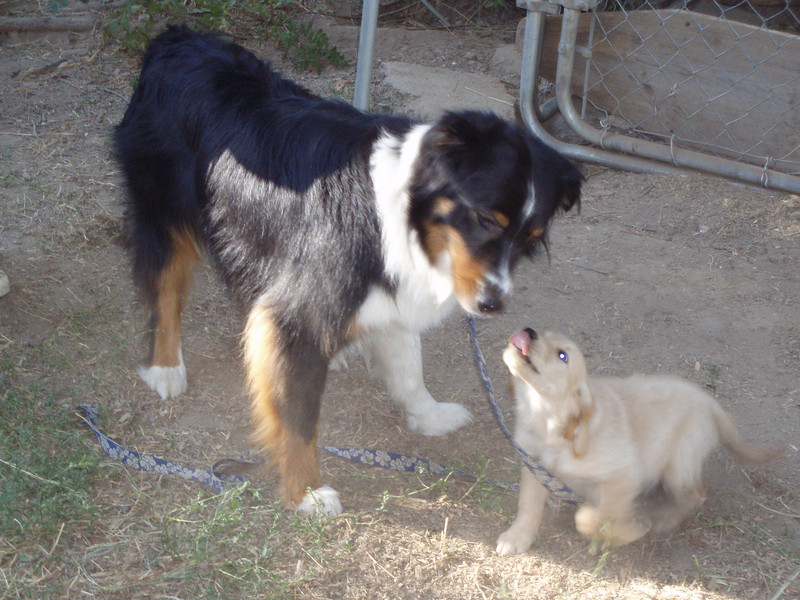 Buddy's first contact with the new addition