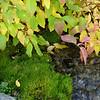 rock, moss,water...