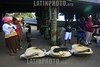Nicaragua - Puerto Cabezas : Miskitos en el Puerto de Bilwi, Puerto Cabezas se dedican a la Caza y Pesca de las Tortugas verdes, las cuales se encuentran en estado de extincion, tienden redes en las corrientes marinas de Sandy Bay y Cayos Miskitos en el Atlantico de Nicaragua . Estas son comercializadas por el costo de U$ 25 a U$ 50. Lista Roja de la UICN. / Turtle meat sold in puerto cabezas. Green sea turtle. C. mydas is listed as endangered by the IUCN and CITES and is protected from exploitation in most countries. It is illegal to collect, harm or kill them. / Nikaragua: Verkauf und Verarbeitung von Schildkrötenfleisch in Puerto de Bilwi. Die Suppenschildkröte (Chelonia mydas) ist ein Vertreter der Meeresschildkröten. Die grüne Meeresschildkröte steht seit 1988 durch das Washingtoner Artenschutz-Übereinkommen unter internationalem Schutz auf der roten Liste gefährdeter Arten. Artenschutz. © Inti Ocon/LATINPHOTO.org