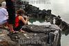 Invasion humana al medio ambiente . Galapagos. Ecuador. Pajaro. Ave. Piquero de patas azules. / Ekuador : Touristen auf den Galapagos Inseln. © German Falke/LATINPHOTO.org