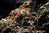 Argentina : Trabajo en progreso . Perdida y desperdicios de alimentos - CEAMSE - Aves - Pala excavadora / Argentinien : Müllhalde - Deponie © Augusto Famulari/LATINPHOTO.org