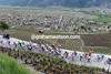 The peloton attacks the last climb of the race, with views above the vignes of Leytron...