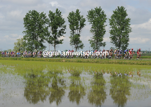 The peloton strolls past the rice fields of Piemonte as the escape pulls safely away - maybe it's Risotto for dinner tonight..?
