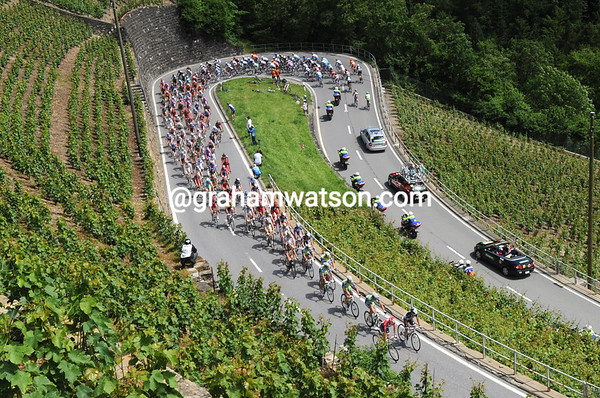The peloton starts its climb between acres and hectacres of white wine...