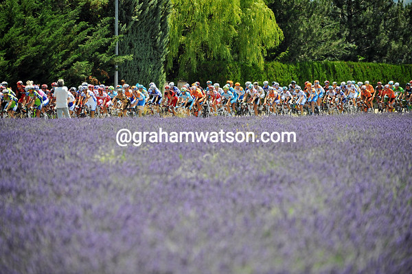 The Tour de France greets its first fields of Lavender in 2010...