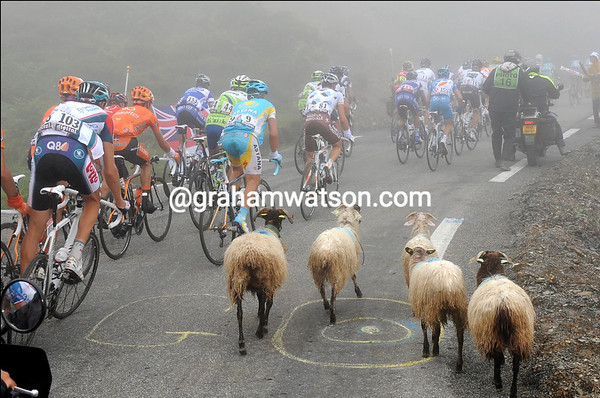 There are two kinds of animals on the Col du Soulor today...