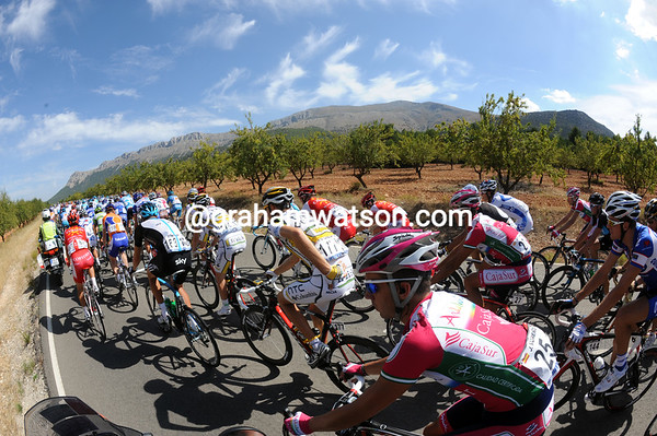 The landscape is getting greener - a sign that the Vuelta is approaching the fruit-growing region of Murcia...