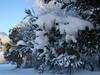 cold feb 2011 005