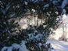 cold feb 2011 006