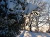 cold feb 2011 007