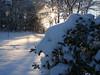 cold feb 2011 010