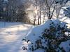 cold feb 2011 009
