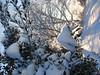 cold feb 2011 008