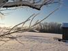 cold feb 2011 003
