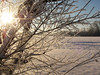 cold feb 2011 004