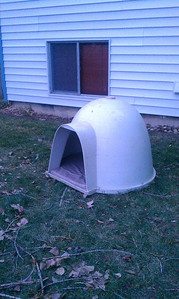 Anya's new dog igloo for her to use when she's outside