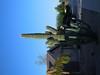 arizona trip 015