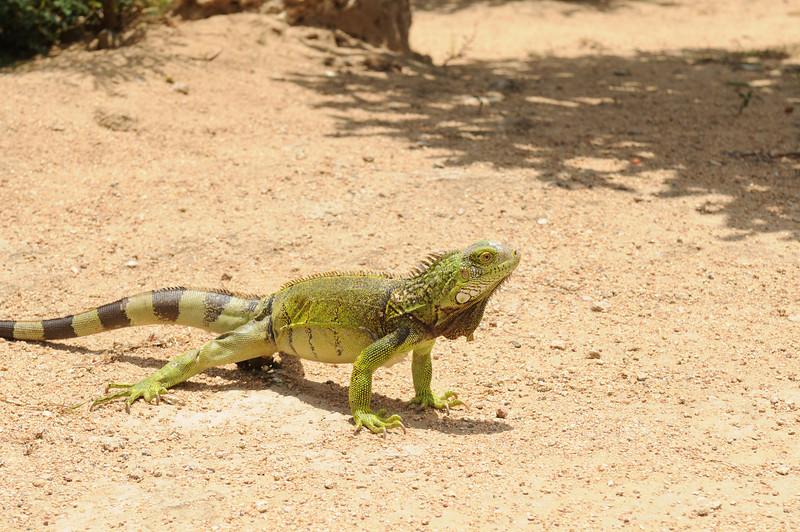 2011_Aruba_0005