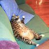 Fat cat Barney
