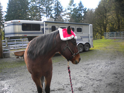 2011 Holly Jolly Horses
