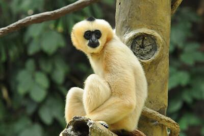 2011_Minnasota_Zoo_0011