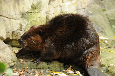 2011_Minnasota_Zoo_0013