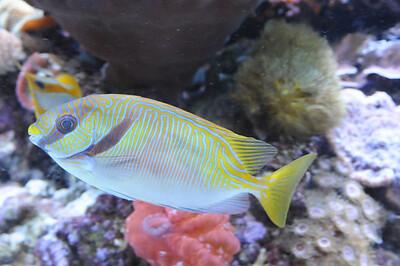 2011_Minnasota_Zoo_0023