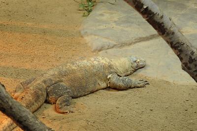 2011_Minnasota_Zoo_0009