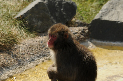 2011_Minnasota_Zoo_0005