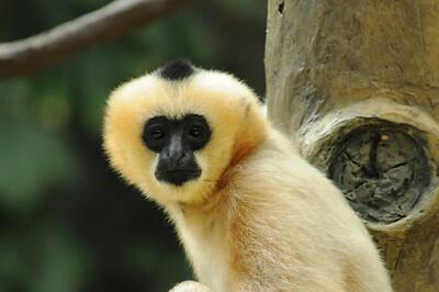 2011_Minnasota_Zoo_0012