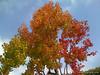 Fall colors at Spectrum in Santa Barbara