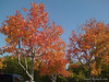 Fall colors at Spectrum in Santa Barbara