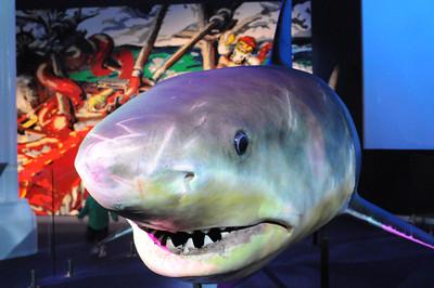 2011_Sydney_Aquarium_0004