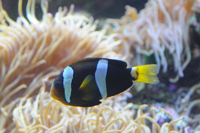2011_Sydney_Aquarium_0026