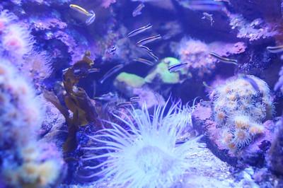 2011_Sydney_Aquarium_0010