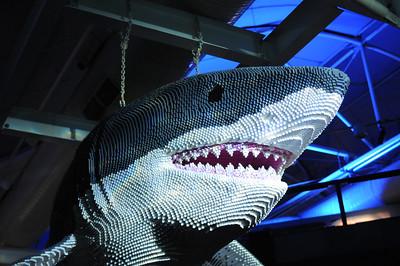 2011_Sydney_Aquarium_0007