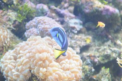 2011_Sydney_Aquarium_0023