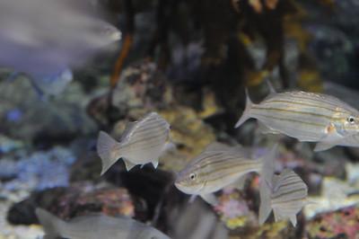 2011_Sydney_Aquarium_0012