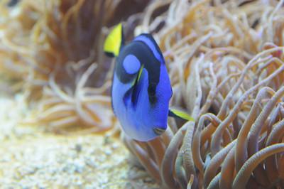 2011_Sydney_Aquarium_0024