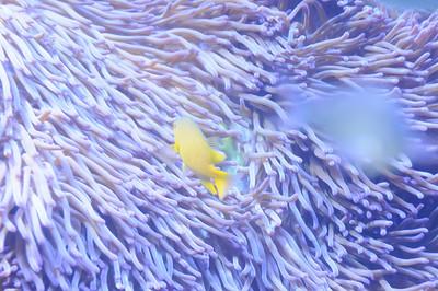 2011_Sydney_Aquarium_0014