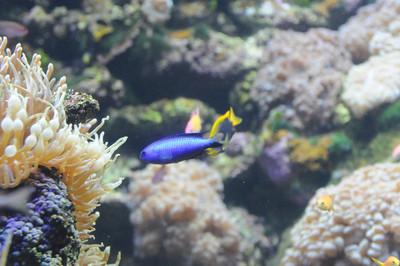 2011_Sydney_Aquarium_0020