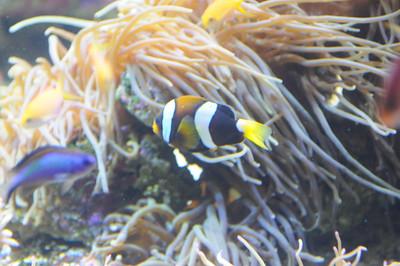 2011_Sydney_Aquarium_0025